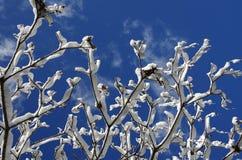 Branchements couverts de neige Images stock