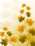 Branchements d'érable colorés par automne Images libres de droits