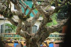 Branchements d'arbre images stock