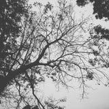 Branchements d'arbre Photographie stock libre de droits