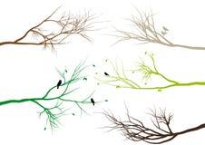 Branchements d'arbre,   Photographie stock