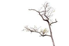 Branchements d'arbre photos libres de droits