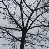 Branchements d'arbre Photographie stock