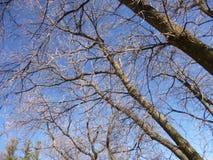 Branchements d'arbre Image libre de droits