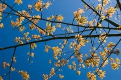 Branchements d'arbre allumés par dos Image libre de droits