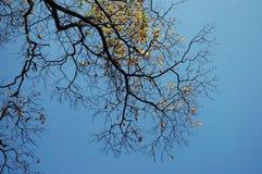 Branchements d'arbre avec le ciel sur le fond photos stock