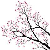 Branchements d'arbre avec les fleurs roses Photo libre de droits