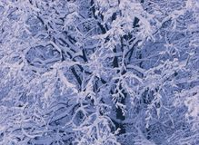 Branchements d'arbre couverts de neige Photo stock