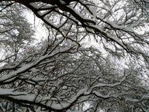 Branchements d'arbre couverts de neige photos libres de droits