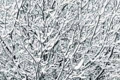 Branchements d'arbre couverts de neige images stock