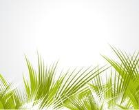 Branchements d'arbre d'isolement sur le fond blanc Photos libres de droits