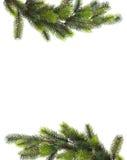 Branchements d'arbre de Noël Images stock
