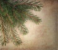 Branchements d'arbre de Noël Photographie stock