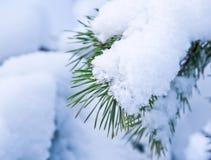 Branchements d'arbre de pin couverts de neige Photo libre de droits
