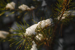 Branchements d'arbre de sapin de neige sous des chutes de neige Images stock