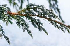Branchements d'arbre de sapin de neige sous des chutes de neige Détail d'hiver Photos libres de droits