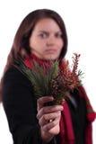 Branchements d'arbre femelles de fixation Photo stock
