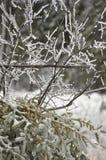 Branchements d'arbre glacials Image libre de droits