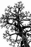 Branchements d'arbre noirs Photos stock