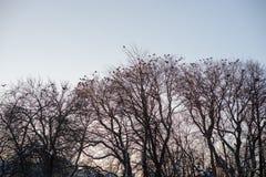 Branchements d'arbre noirs images libres de droits