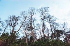 Branchements d'arbre secs photo libre de droits