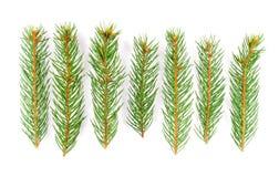 Branchements d'arbre verts de pin Images libres de droits
