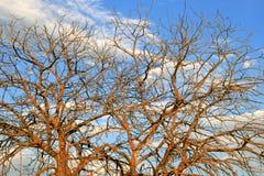 Branchements d'un arbre sans lames contre le ciel Image libre de droits