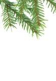 Branchements d'un fourrure-arbre Photo libre de droits