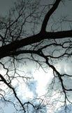 Branchements dans le ciel Photographie stock
