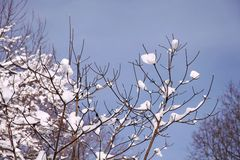 Branchements dans le ciel de l'hiver Photos stock