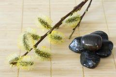 Branchements de floraison avec des pierres Photographie stock libre de droits