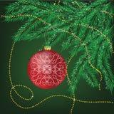 branchements de Fourrure-arbre Photo stock