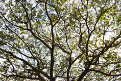 Branchements de l'arbre Photographie stock libre de droits