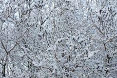 Branchements de l'hiver Images libres de droits