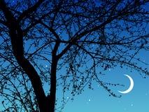 Branchements de nuit Images libres de droits