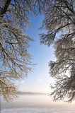 Branchements de rideau donnant sur le brouillard de matin Image stock