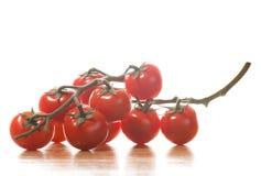 Branchements de tomate sur le fond blanc Image libre de droits