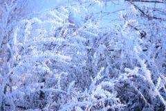 Branchements des arbres couverts de gelée Image libre de droits