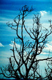 Branchements et ciel morts Photographie stock