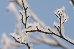 Branchements Ice-covered Images stock