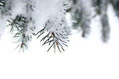 Branchements impeccables avec la neige Images libres de droits