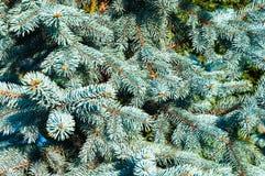 Branchements impeccables bleus Images stock