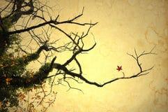 Branchements nus d'érable en automne image libre de droits
