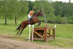 Brancher de cheval de châtaigne Photo stock
