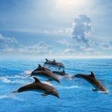 Brancher de dauphins Photos stock