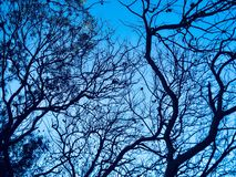 Branches' postać i niebieskie niebo fotografia royalty free