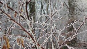 Branches à fourrure blanche photographie stock