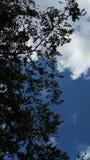 Branches éclipsant un jour nuageux photographie stock libre de droits