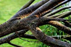 Branches épaisses d'arbre au jour vert images libres de droits