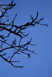 Branches Stock Photos
